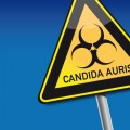 Illustration Of Information Sign With Candida Auris Typed And Biohazard Symbol